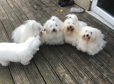 Group meeting at Cotonxtreme Kennel