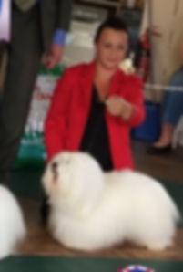 coton de tulear puppies for sale, coton de tulear breeder