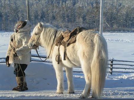 I cavallini di Yakut