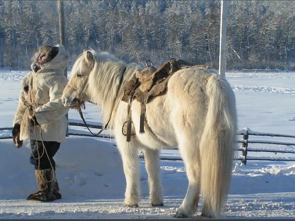 Yakut cavallo Siberia