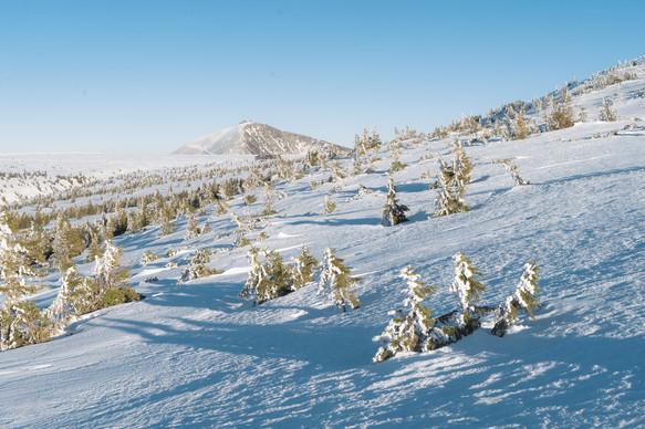 Sněžka od Kozích hřbetů