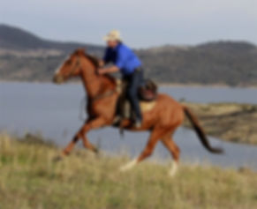 Horse riding in Thredbo