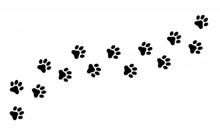 paw-print-cat-dog-puppy-pet-trace_177006