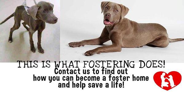 foster image.jpg