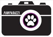 pawparazzi.JPG