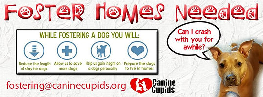 Canine Cupids foster homes Milwaukee