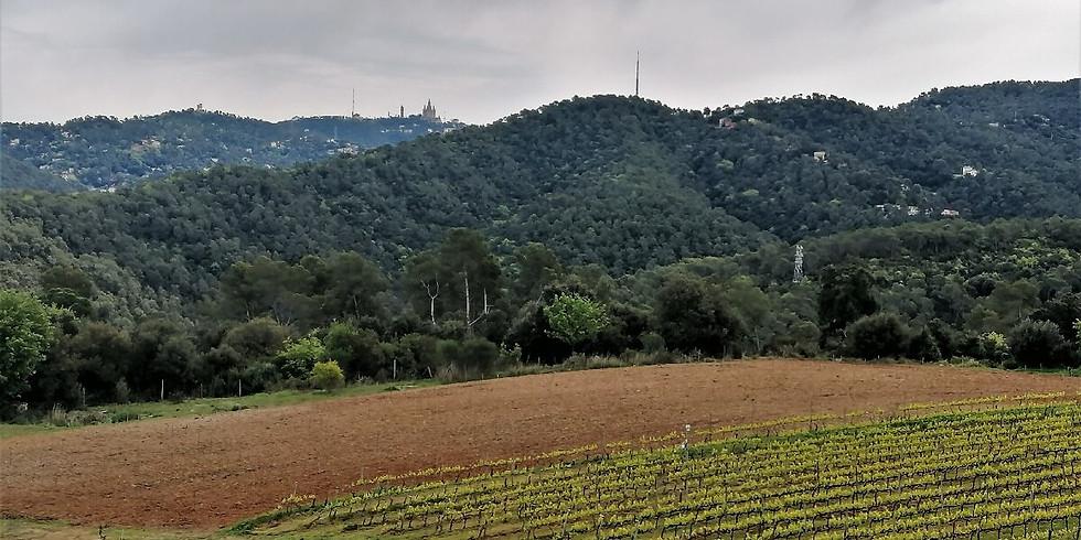 WineHike in Collserola