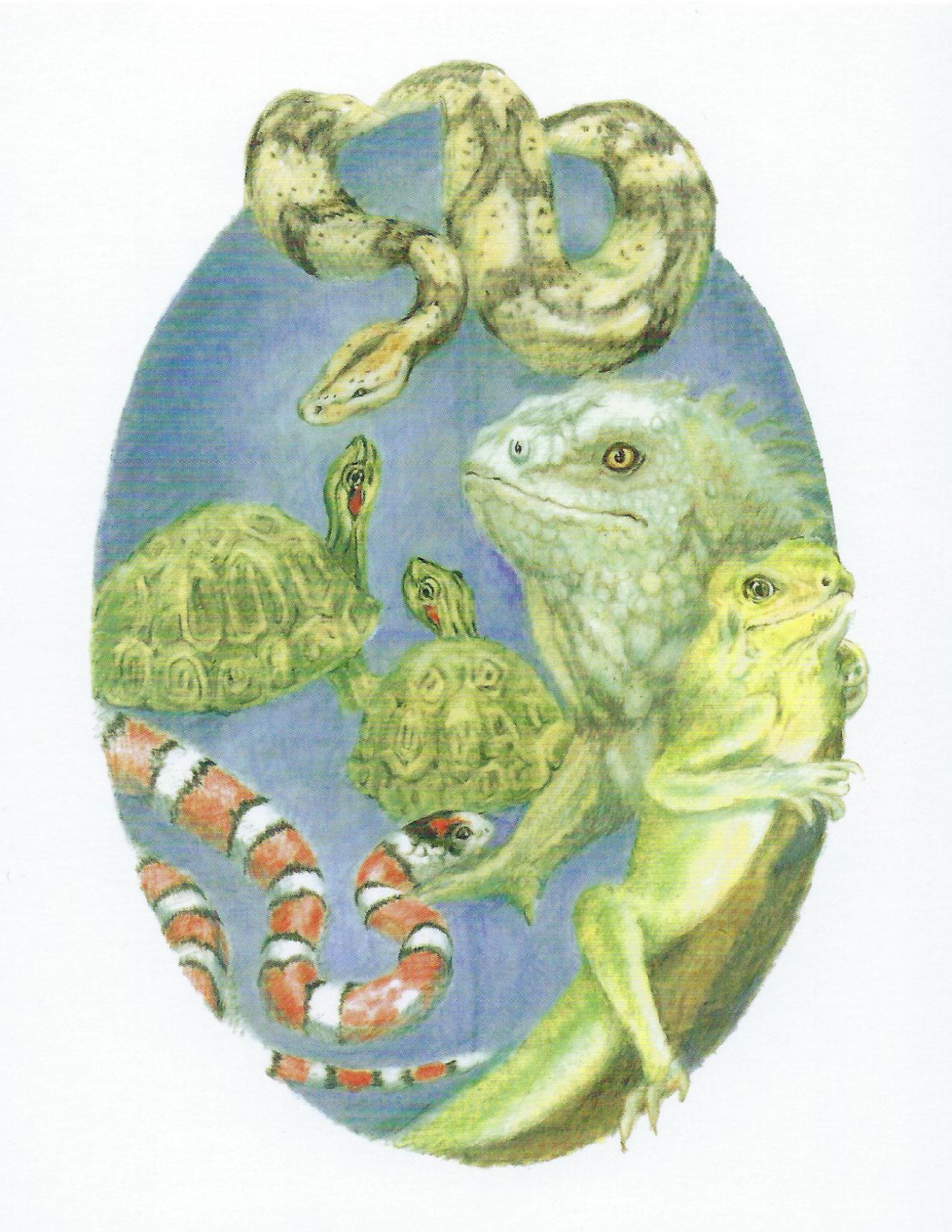 S47 Reptile Sympathy Card