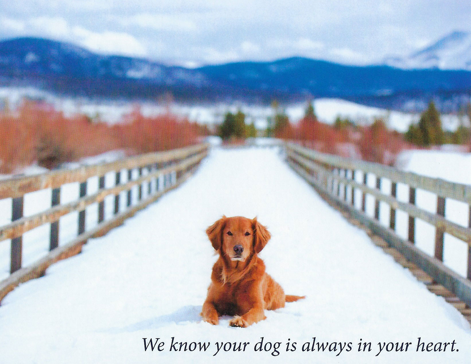 S205 Dog Sympathy Card