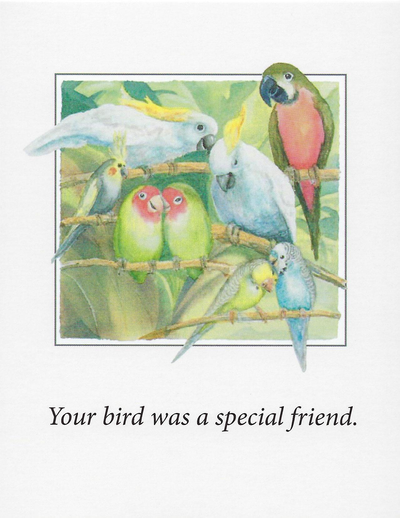 S72 Bird Sympathy Card