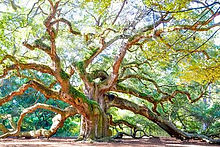 angel-oak-1024x683_opt.jpg
