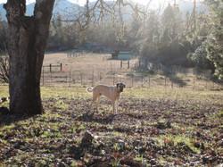 Peh-ha enjoying himself in Oregon   Richard Haight
