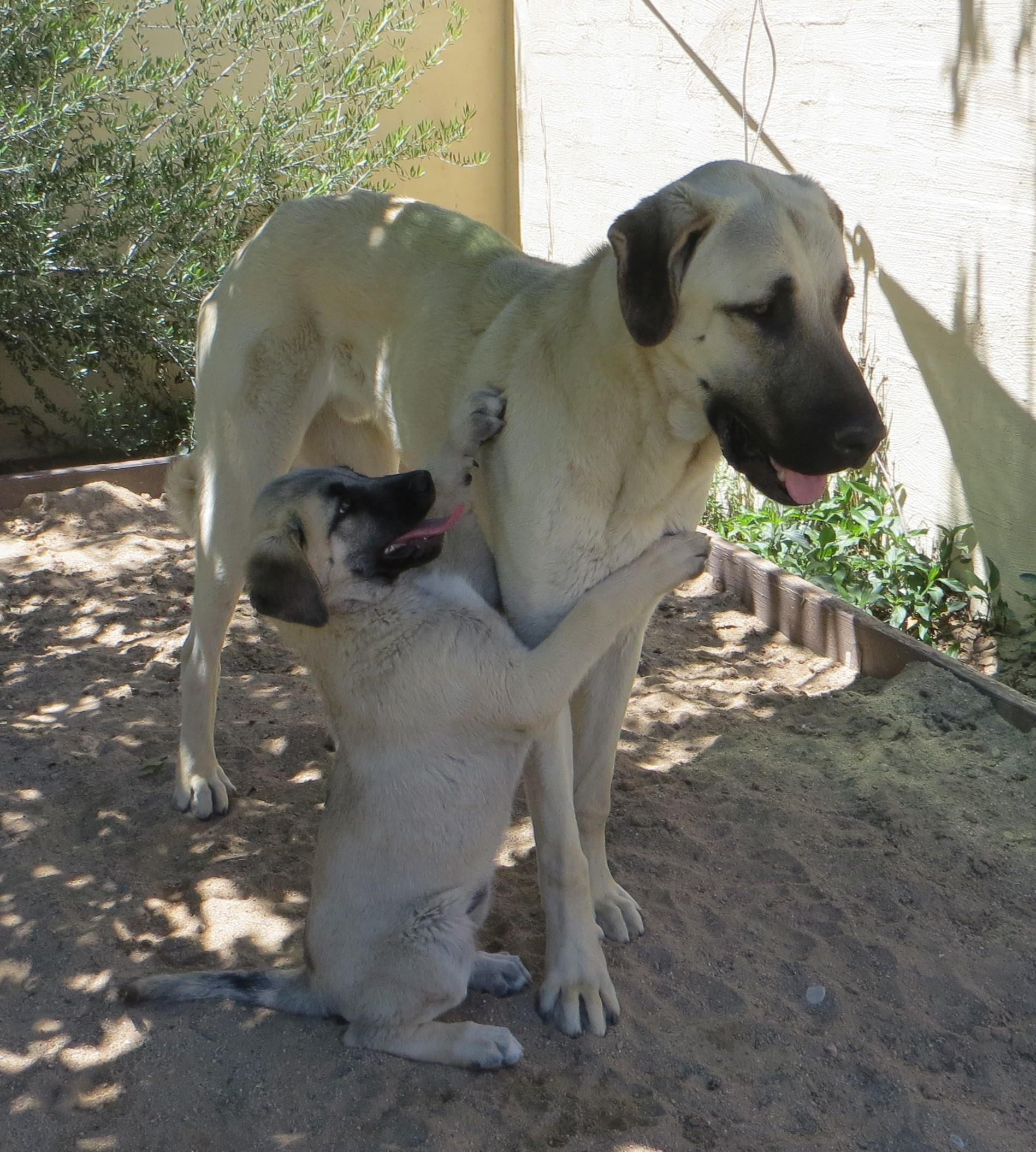 Ruzha hug Tyro