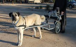 Zouri taking baby sister Zasha for a ride - Sr. Antonia