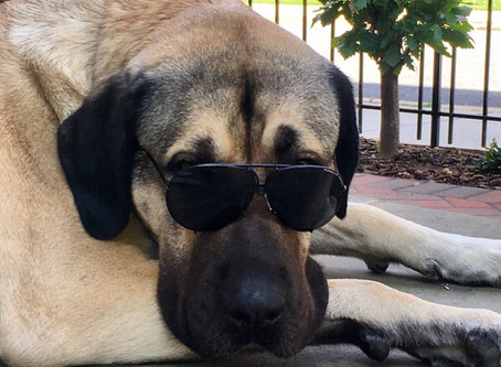 An Urban Kangal's Top Ten List