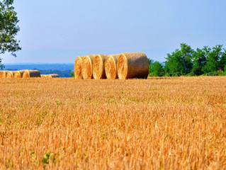 Make Hay While the Sun Shines...