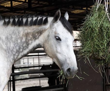 Mellott_shutterstock_2_horse.jpg
