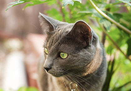 Sutterstock_10_cat_eyes.jpg