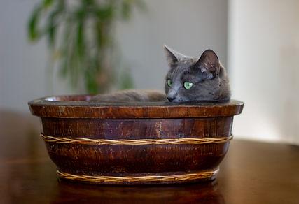 Mimi on the dish.jpg