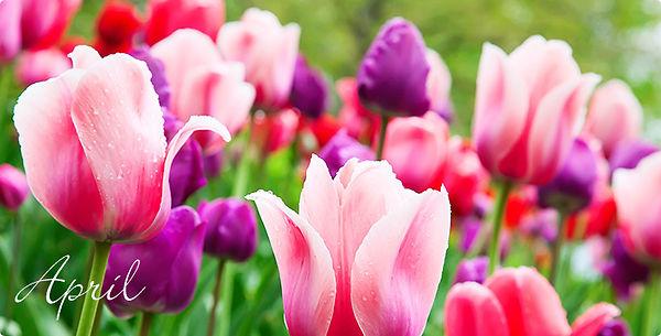 Produktwelt_Garten_April_708x360_daP.jpg