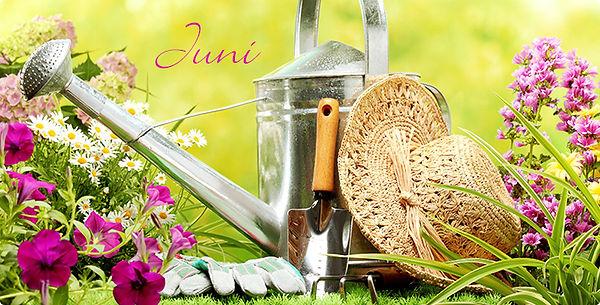 Produktwelt_Garten_Juni_708x360_daP.jpg