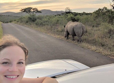 Would you kill someone to save a rhino?