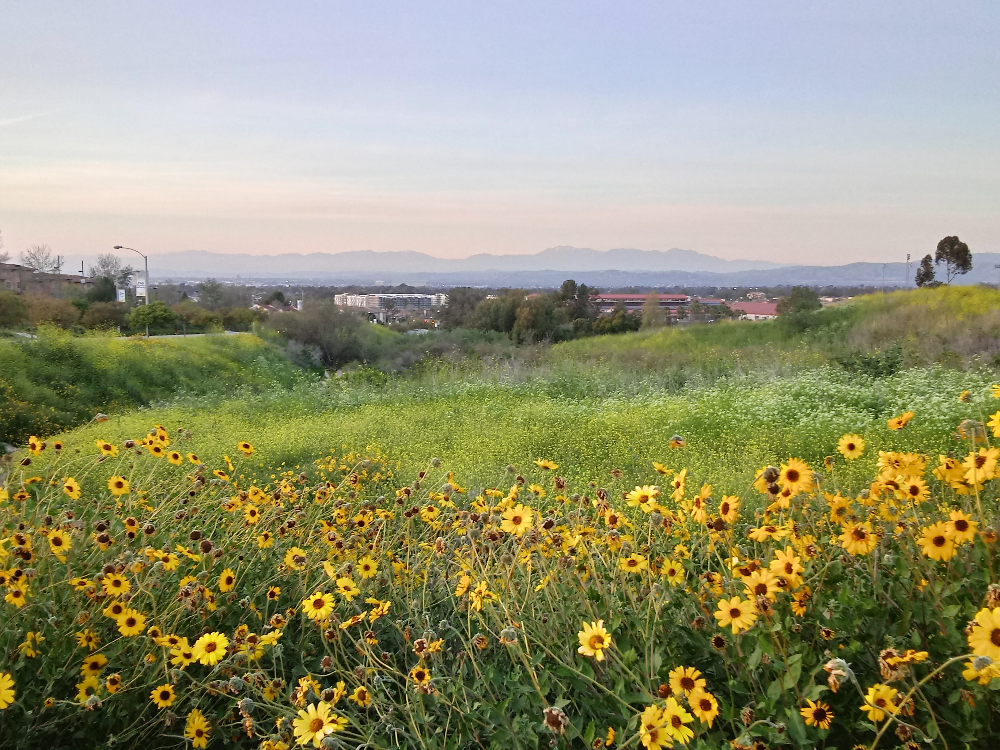 Spring at UC Irvine