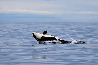 Sitka Whale Watching Tour
