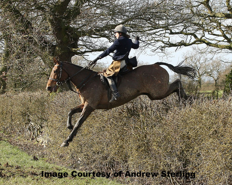 Hedge Hopping