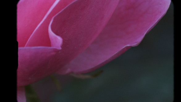 Rose Silence Final.mov
