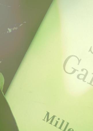 Secret Gardenia Instagram.mp4