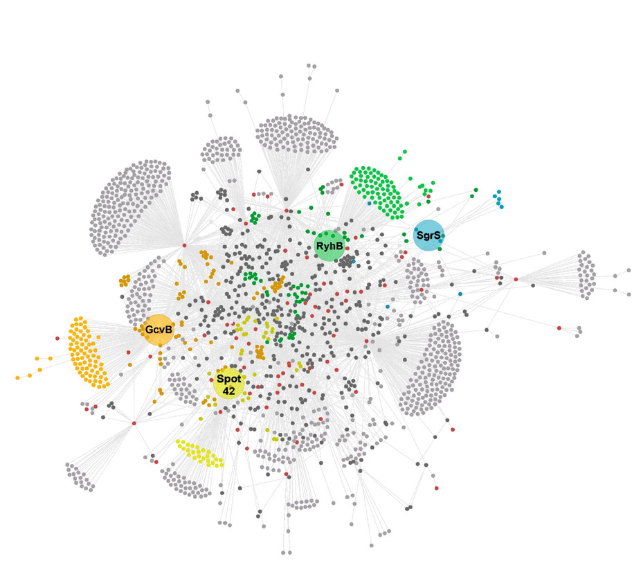 GLOBAL DISCOVERY AND CHARACTERIZATION OF SMALL REGULATORY NETWORKS