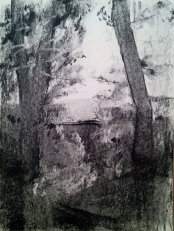 Golan Trees / Charcoal on Paper