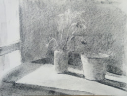 Window Vase / Graphite on Paper