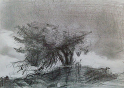 Tree in Storm / Graphite on Paper