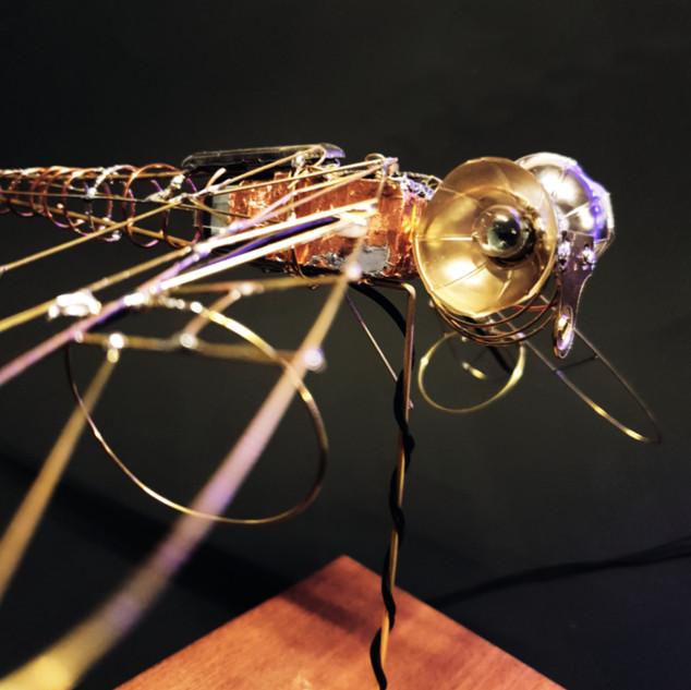 Dragon Fly Automata