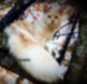 IMG_9032_edited_edited.jpg