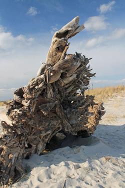 Beach roots 1a
