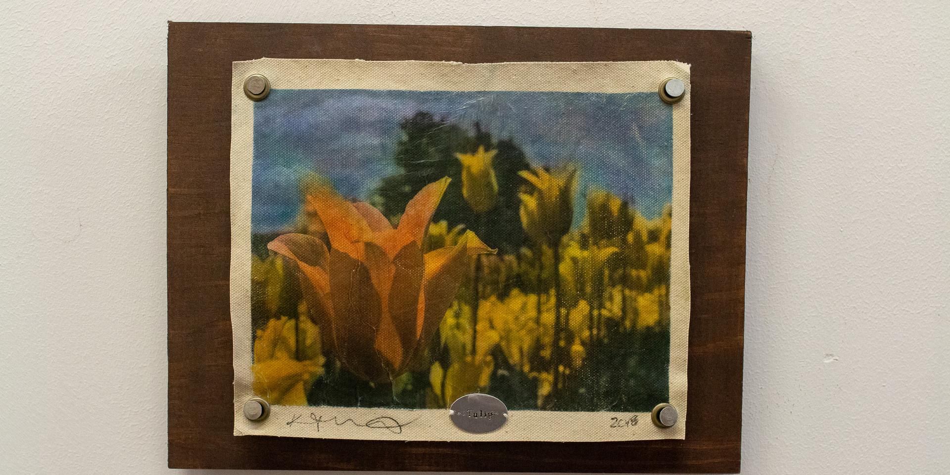 Tulip 1.jpg