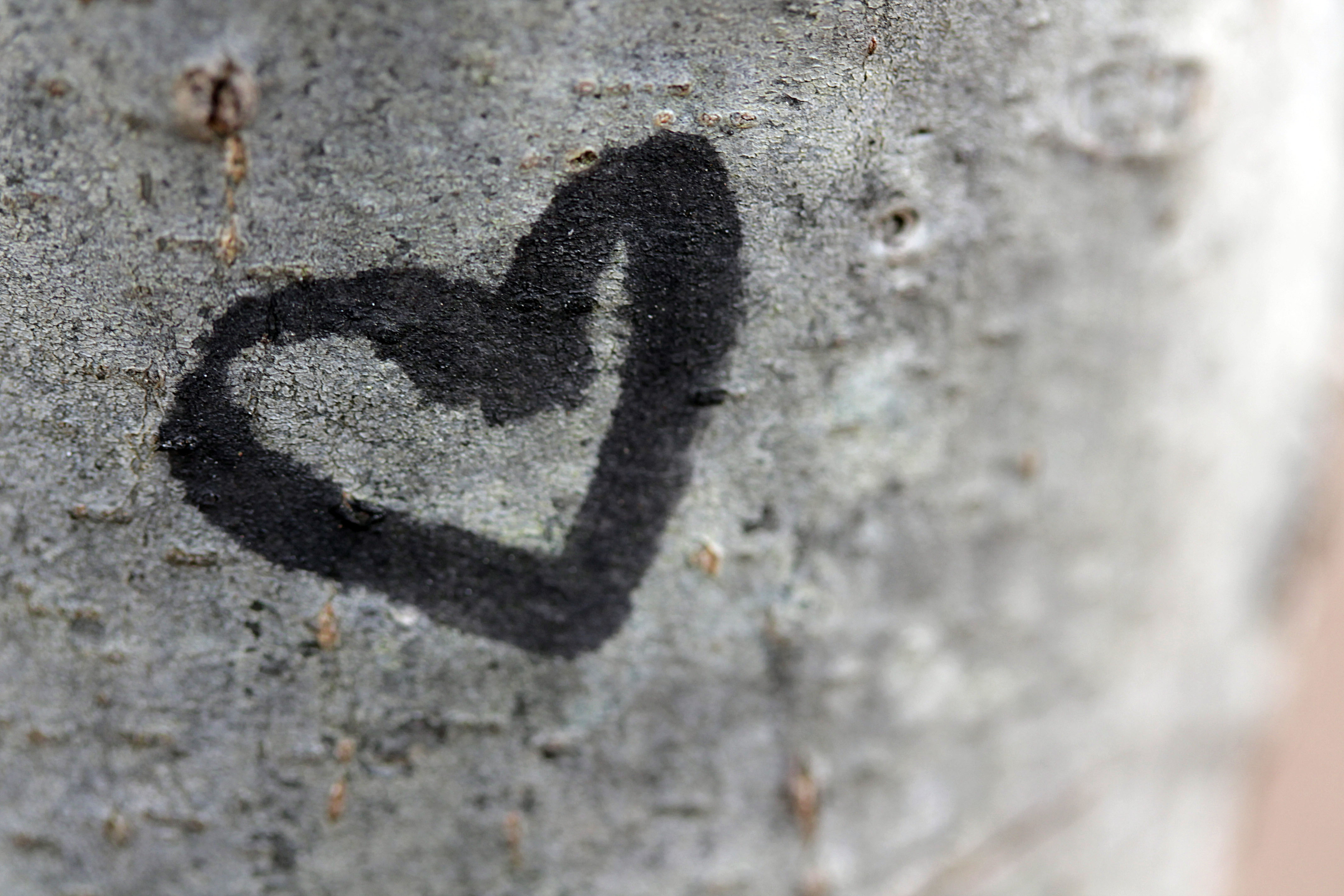 Heart on bark macro 1