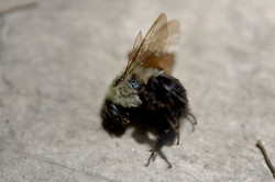 New Dead Fly
