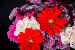 close up flowers 9x12