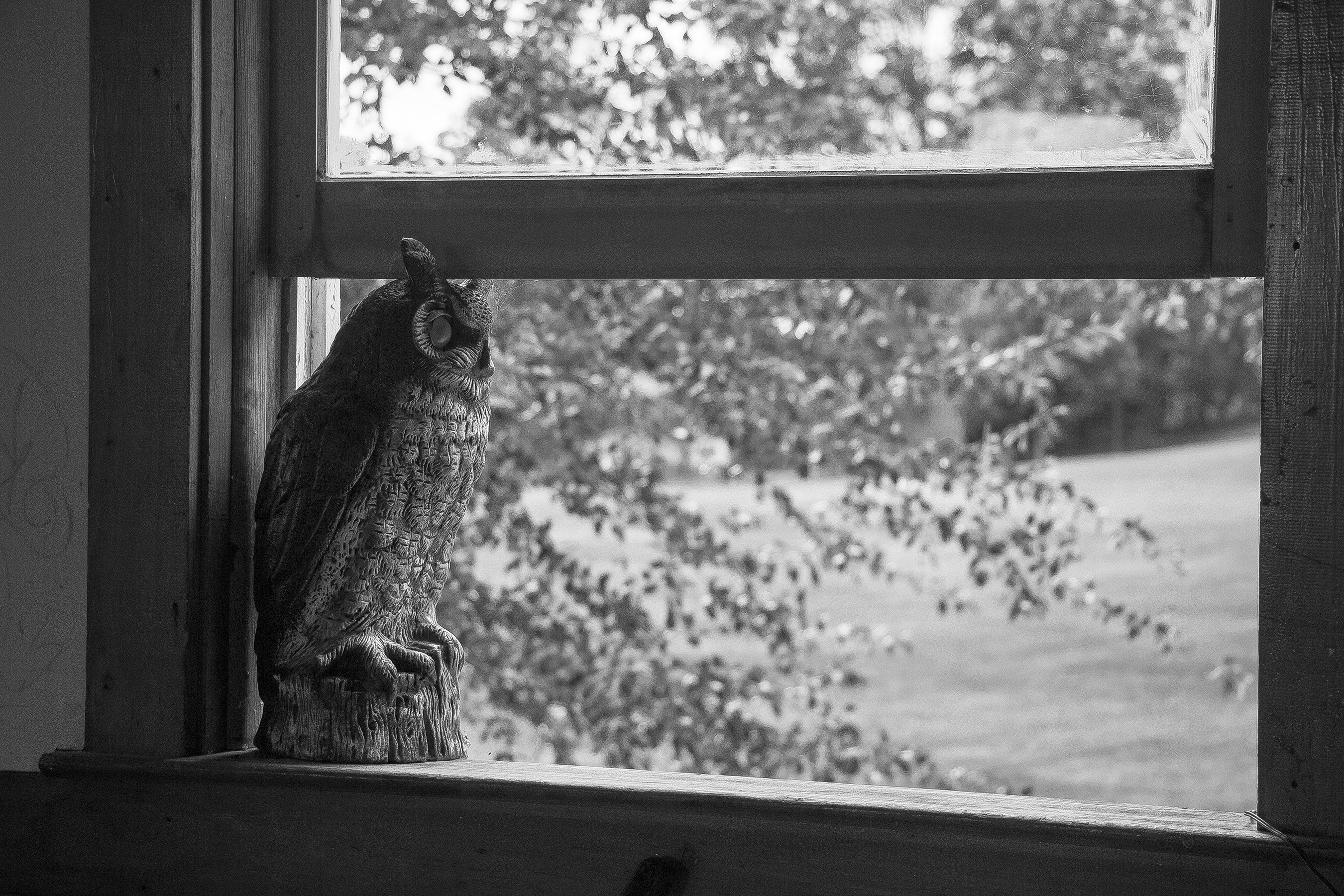 owl bw