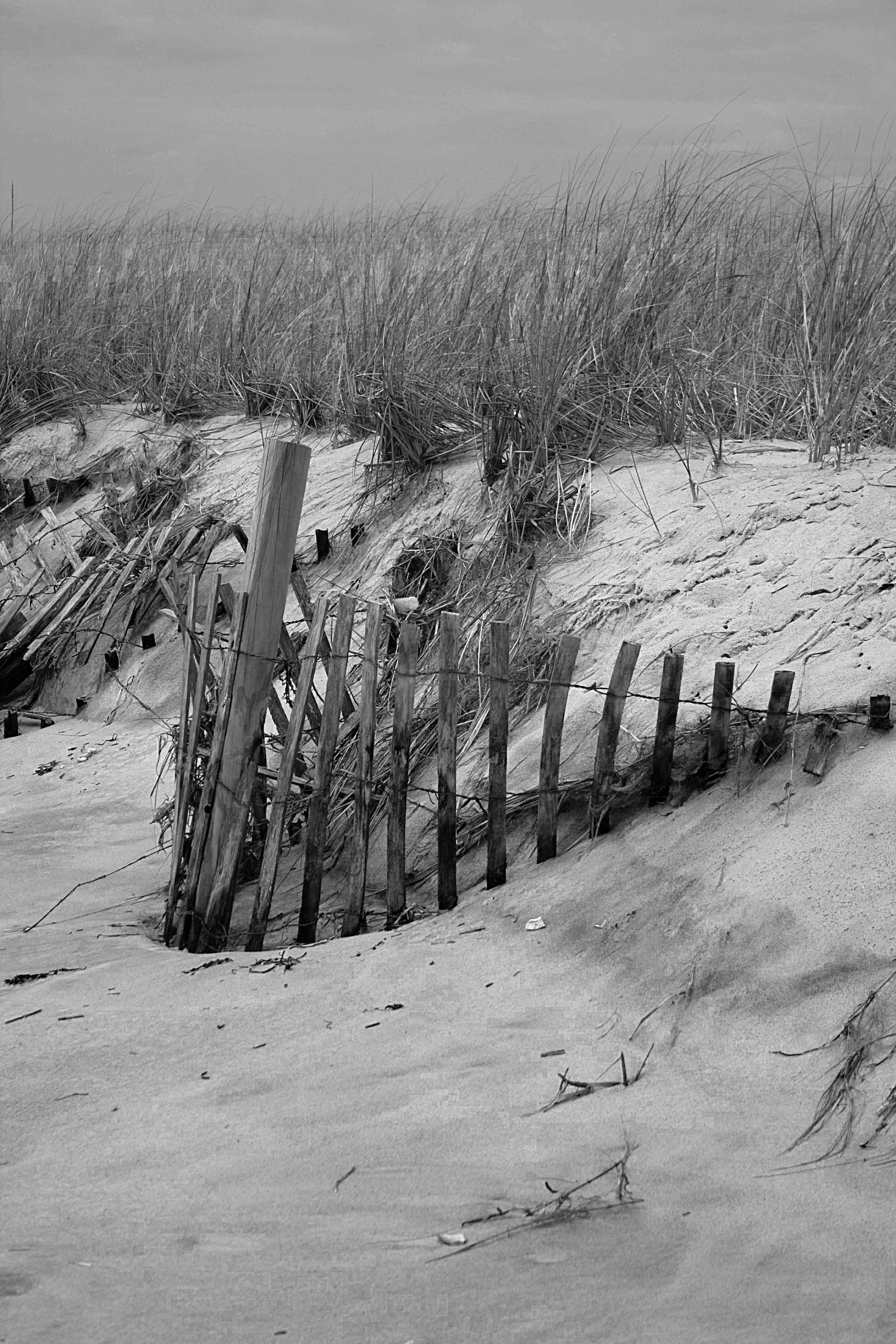 Beach grass and fencing bw