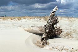 Beach Roots 2