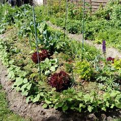 le jardin 8.jpg