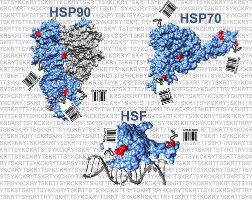 Hsp90Code-rev6.jpg