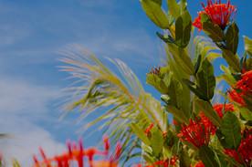 Hibiscus Beach Flora