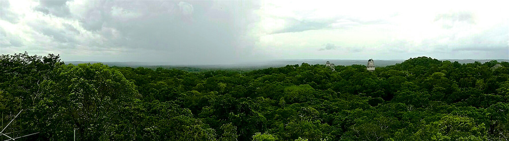 Tikal Temples through the Treetops