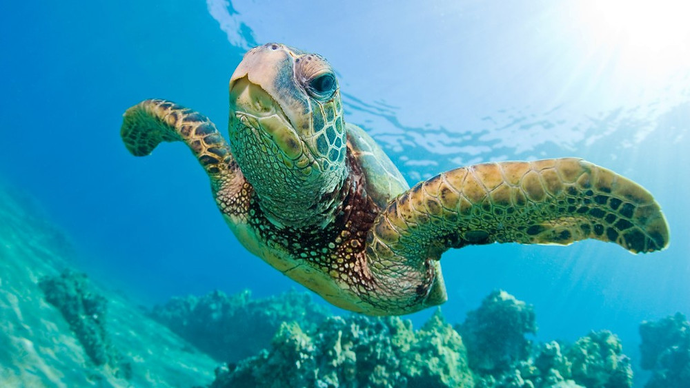 Celebrate sea turtles while on your vacation in Myrtle Beach at Grand Palms Resort!